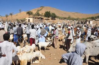 Eritrea animal market