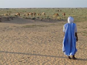 Mauritanian desert