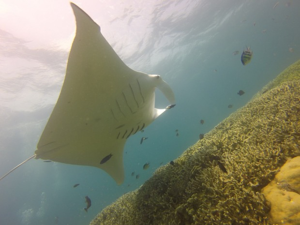 Diving in Yap